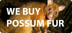 http://www.seriousshooters.co.nz/we-buy-possum-fur-xidc107660.html
